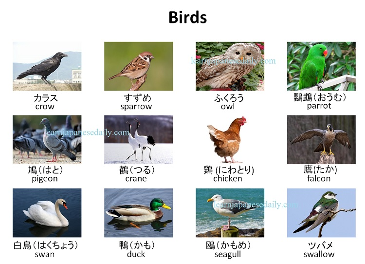 Japanese vocabulary on birds - Japanese words by theme